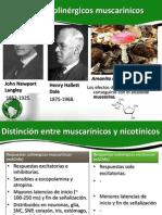 Receptores colinérgicos muscarínicos