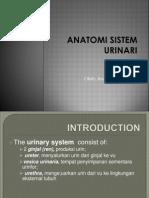 Anatomi Sistem Urinari