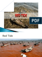 FINAL Redtide & RABIES Ppt Ko.ppt