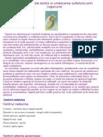 Cauzele-Subtile-Ale-Bolilor-Si-Vindecarea-Sufletului-Prin-Rugaciune