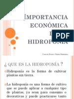 Importancia económica de la hidroponía