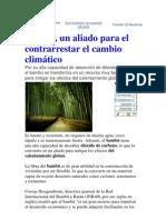 El Bambu Una Oportunidad Para Los Pobres Ricos