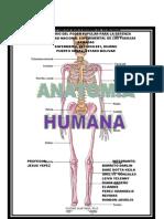 OSTEOLOGIA (1)