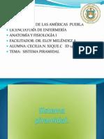 SISTEMA PIRAMIDAL-ANATOMÍA-146235.or