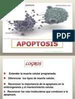 Apoptosis CQ