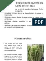Clasificación de plantas de acuerdo a larespuesta ante el agua