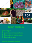 Reino Animalia - Invertebrados