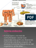 endocrino 2ºC
