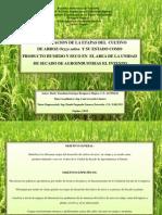 Identificación de las Etapas del Cultivo de Arroz (Oriza sativa) y su estado como producto húmedo y seco en el Area de la Unidad de Secado de Agroindustrias El Intento