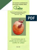 Uso de brotes para la producción de tubérculos - semilla de calidad