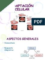 adaptacioncelular-110813005708-phpapp01[1]
