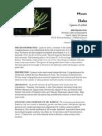 Cya_stj plant NTBG_s.pdf