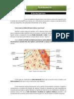 CN9 - Sistema linfático