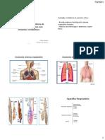 1.1  revisão anatomia e fisiologia