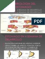 Embriologia Del Estomago
