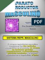 14. Sistema Reproductor Masculino