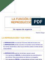 323376 La Funcion de Reproduccion
