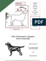 Labrador retriver standard