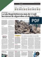 La tala ilegal deforesta más de 13 mil hectáreas de algarrobos al año en Piura
