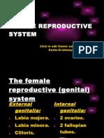 FEMALE REPRODUCTIVE SYSTEM._uterus (lect.18-11)..pptx
