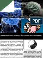 Adaptacion Al Perfil Metabolico Del Cerebro en Ayuno Prolongado y Ejercicio