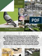 ANALISIS MICROBIOLOGICO EN HECES DE PALOMA DOMESTICA Columba livia