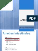Mi Expo de Amebas