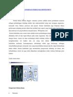 Anatomi Dan Fisiologi Sistem Imun