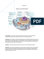 Animal Cell and Its Functions