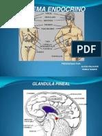 Diapositivas Sistema Endocrino