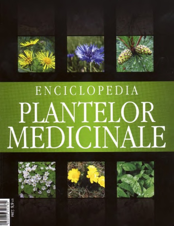 ce plante medicinale să trateze o erecție penisul nu este elastic