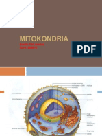 mitokondria5