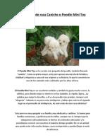 Facilisimo - Los Perros de Raza Caniche o Poodle Mini Toy