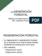 Regeneracion Forestal