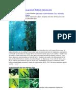 Como Cultivar Algas Para Producir Biodiesel