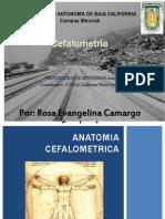 Anatomia Cefalometrica