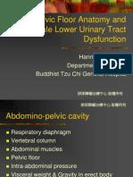 female pelvis function