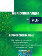 BIO1 - Multicellular Algae Part 2