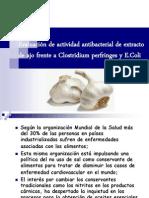 Evaluación de actividad antibacterial de ajo