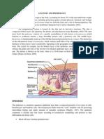 Anatomy and Physiology (Feunrmfcp3c)