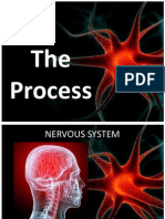 Nervous System Process and Diseases