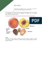 Diferencia Entre El Fruto y La Fruta