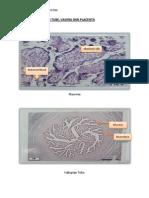 Histology of Fallopian Tube, Vagina and Placenta