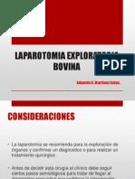 Expo laparotomia bovinaFINAL