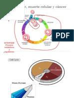 VII. Ciclo celular, muerte celular y cáncer.