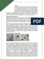 Etiologia Da Micotoxicose