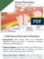 Citologia - Membrana Plasmatica