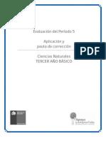 Recurso_PAUTA DE CORRECCIÓN PERÍODO 5_29102012110236