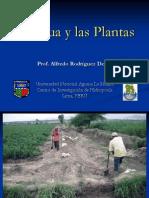 Agua Plantas
