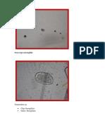 Parasitologia Atlas (Reparado)